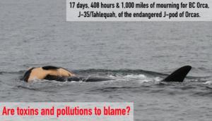 BNAC, Orca, endangered, environmental, environment, eco, environmentally friendly